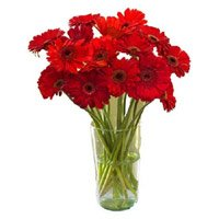 Flowers to Delhi : Red Gerbera in Vase