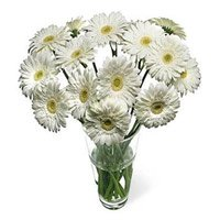 Online Flower Delivery in Delhi - White Gerbera