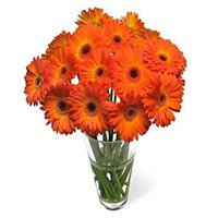 Send Flowers to Delhi : Orange Gerbera