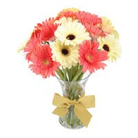 Best Online Flowers to Delhi : Mix Gerbera