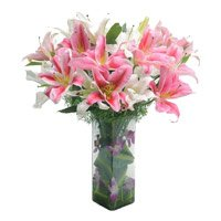 Best Lily Flower in Delhi