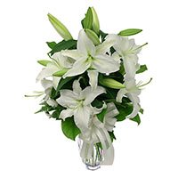 Online Flower Delivery in Delhi : White Lily