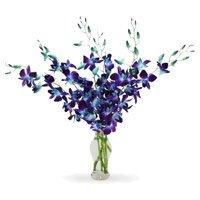 Best Orchid Flowers to Delhi